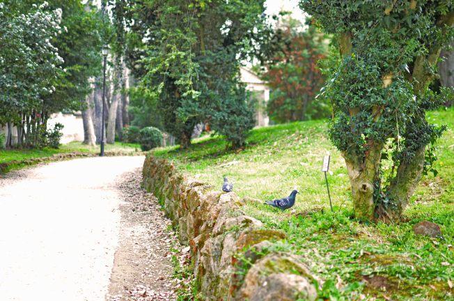 Villa Tolrlonia